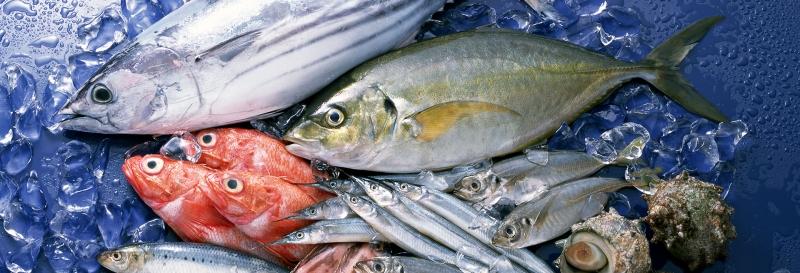 Cá biển có nhiều canxi nhưng cũng có lượng thủy ngân không nhỏ, hạn chế sử dụng trong giai đoạn đầu mang thai