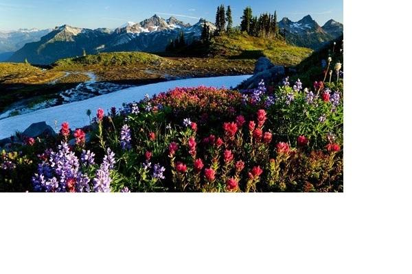 Mùa thu nơi này rực rỡ hơn bao giờ hết nhờ những thảm màu đỏ, vàng, xanh xen kẽ của cây cỏ và các loài hoa