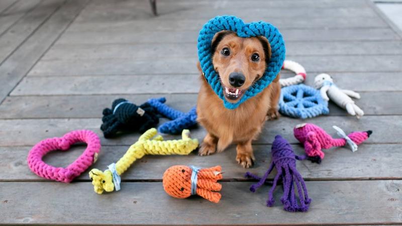 Mua đồ chơi đắt tiền cho thú cưng