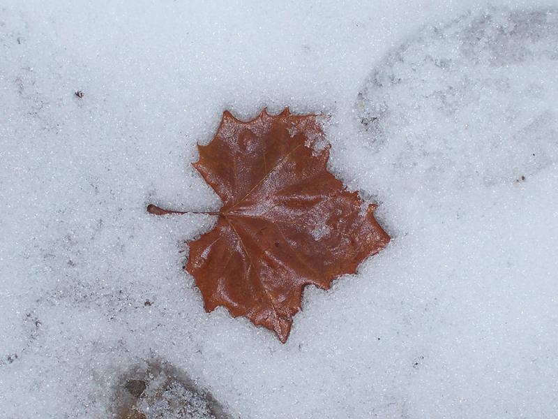 Mùa đông trong anh