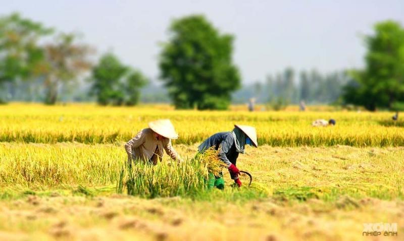 Cũng là thời gian thu hoạch vụ mùa của những người nông dân