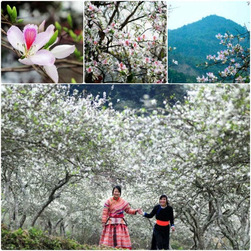 Ban nở trắng xóa núi rừng Điện Biên