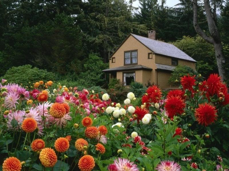 Hoa Bất Tử nở rộ vào mùa Thu Đà Lạt