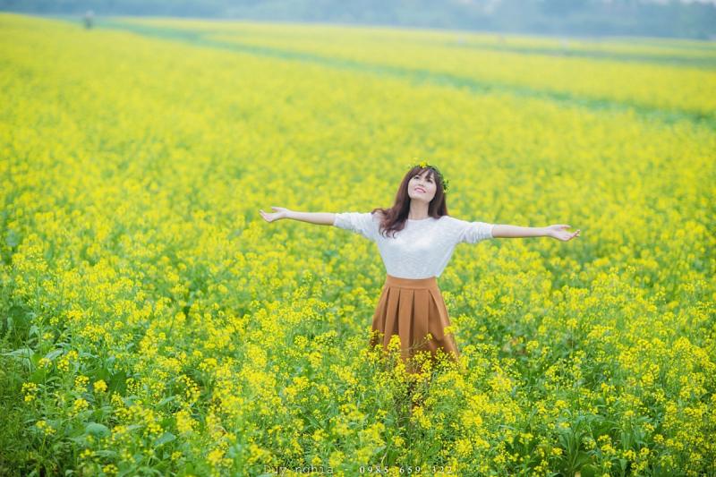 Mùa hoa cải vàng