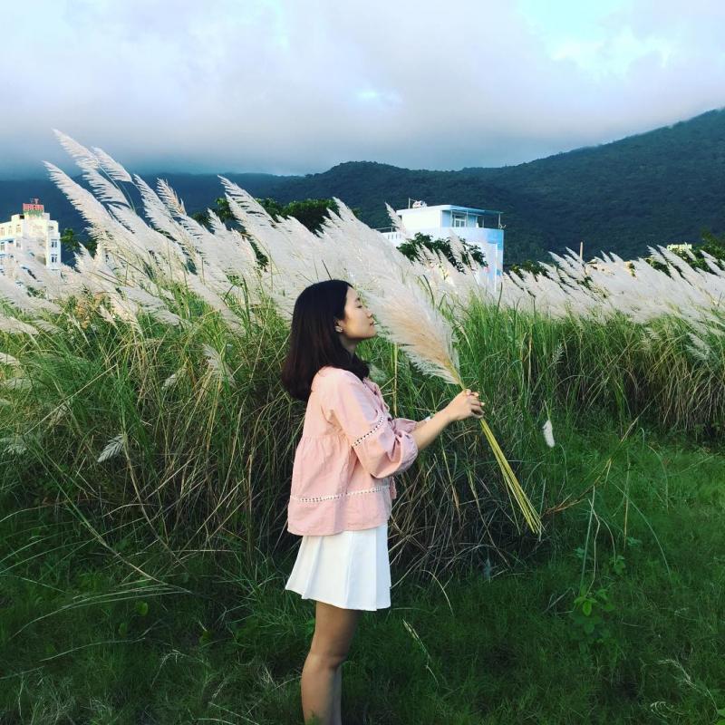 Hoa Cỏ Lau