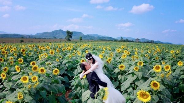 Một cặp vợ chồng chụp ảnh cưới ở cánh đồng hoa Hướng Dương - Đà Lạt