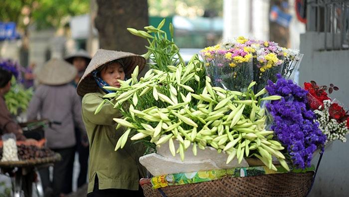 Mùa hoa loa kèn
