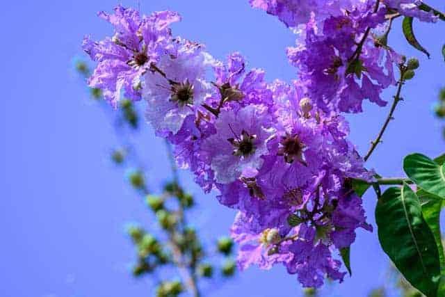 Màu hoa tím còn vương bài thơ cũ