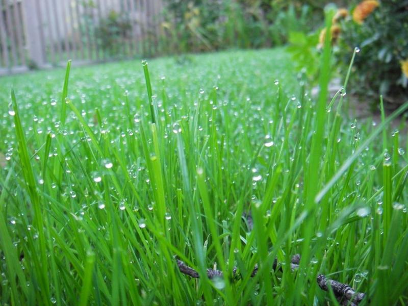 Những ruộng mạ xanh rờn, những hàng lúa đều tăm tắp cứ dần lấp kín thửa ruộng.