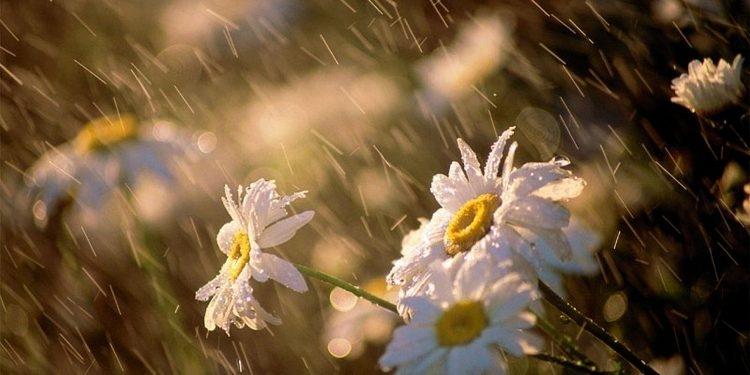 Mưa rơi lất phất, nghiêng nghiêng như muốn làm chênh vênh cả không gian ướt nhòe.