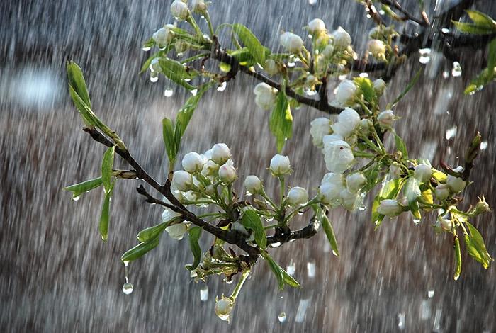 Có lẽ mưa xuân chính là món quà đặc biệt nhất của bầu trời đem lại cho con người.