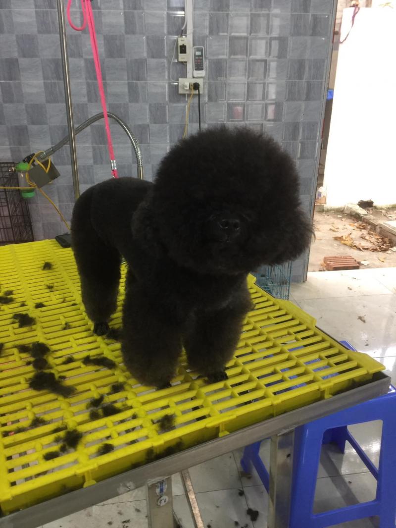 KA Pet Shop