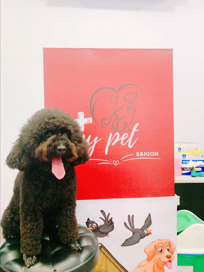 My Pet Sài Gòn