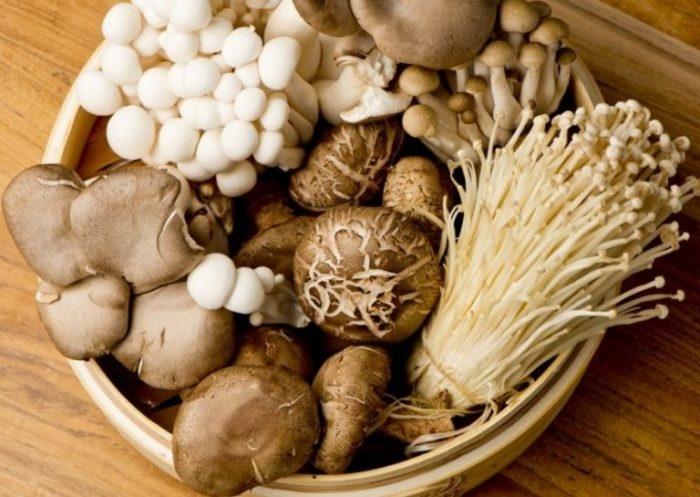 Nghề trồng nấm được coi như một nghề mang lại hiệu quả kinh tế cao ở nước ta.