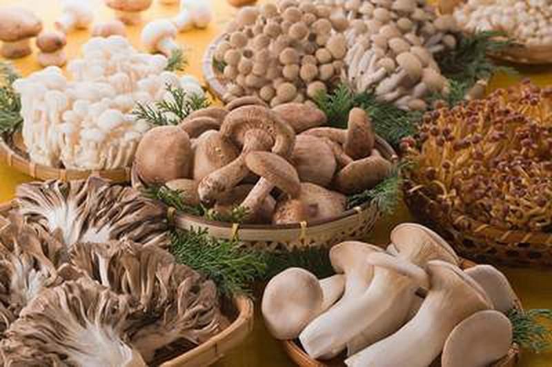 Hãy coi tất cả nấm ở trong rừng là nấm độc và không nên ăn