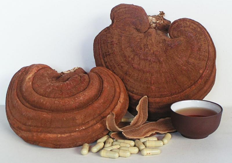 Nấm linh chi - một loại dược liệu quý hiếm từ bao đời