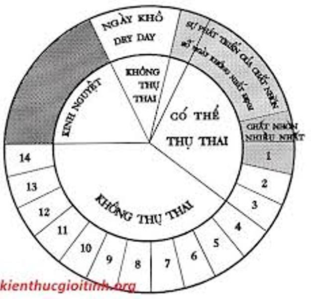 Hiểu rõ chu kì kinh để xác định thời gian rụng trứng