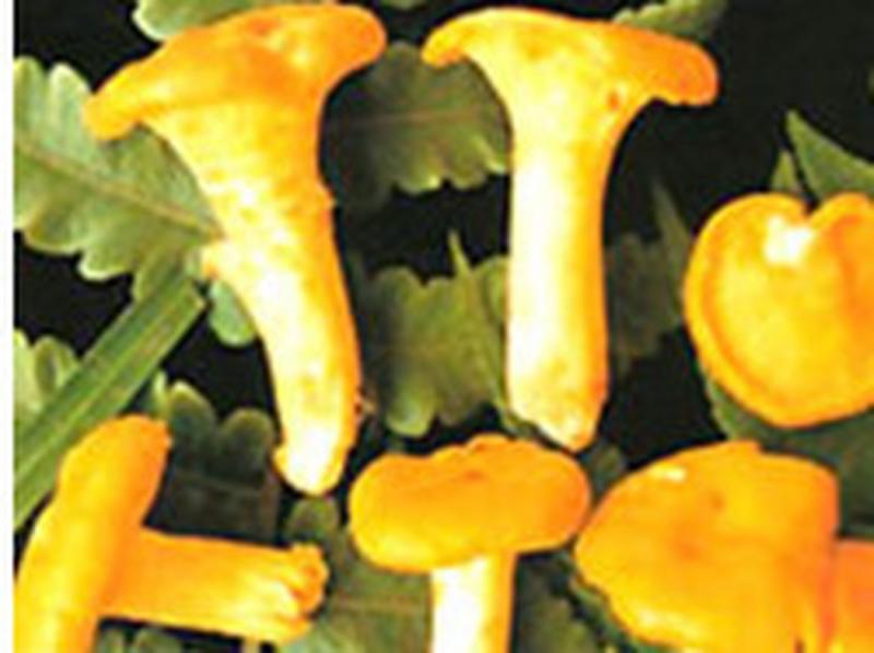 Nấm Trâm vàng