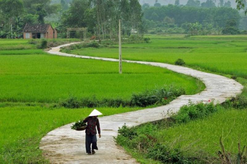 Con đường làng quanh co yên ả.