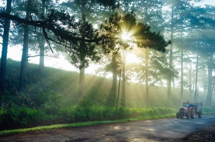 Những giọt sương đêm còn đọng lại trên cành cây, ngọn cỏ long lanh như những hạt ngọc.