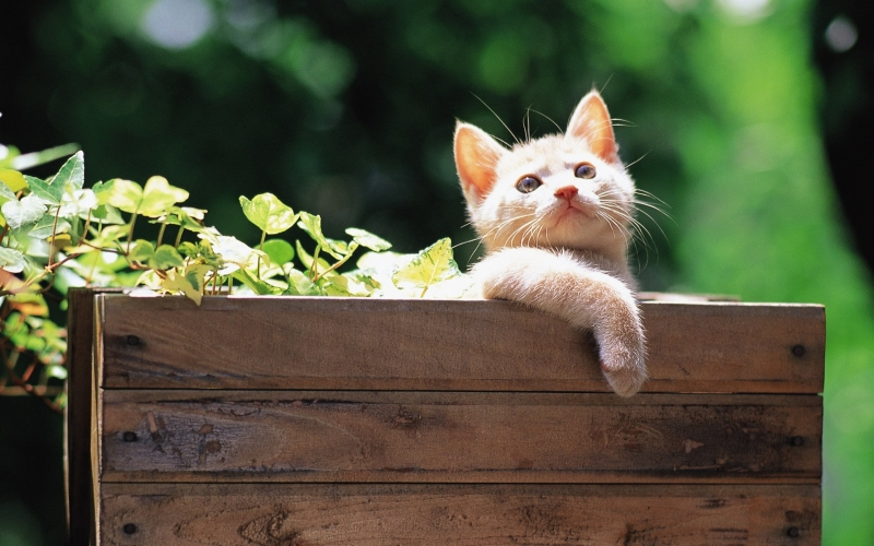 Cô mèo mướp ưỡn ẹo đi ra ngoài sân phưỡn cái bụng trắng hồng sưởi nắng