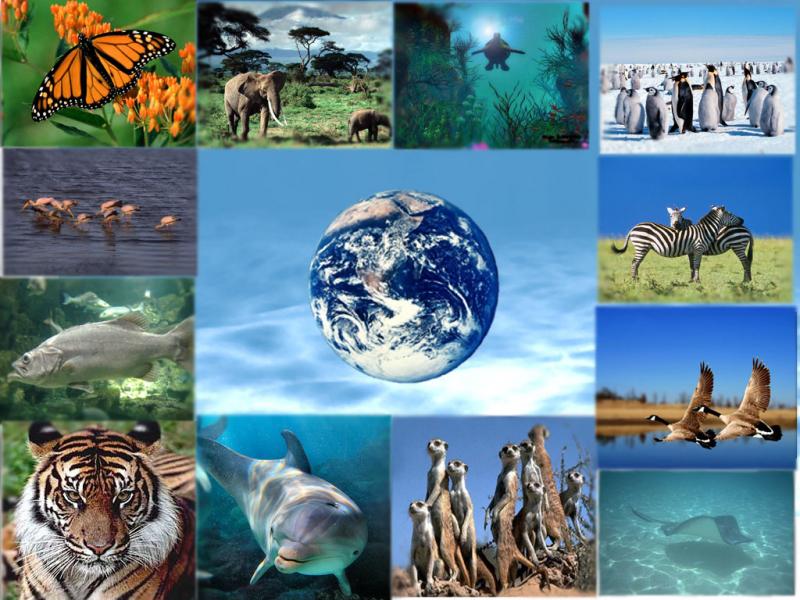 Ngày quốc tế Đa dạng sinh học