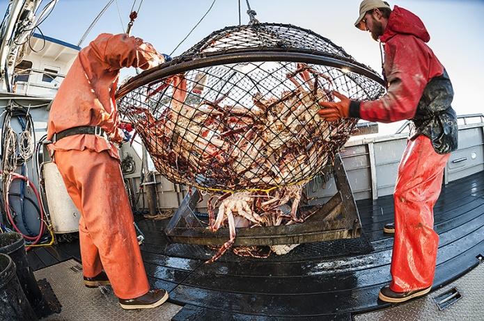 Việc đánh bắt cua của ngư dân Alaska