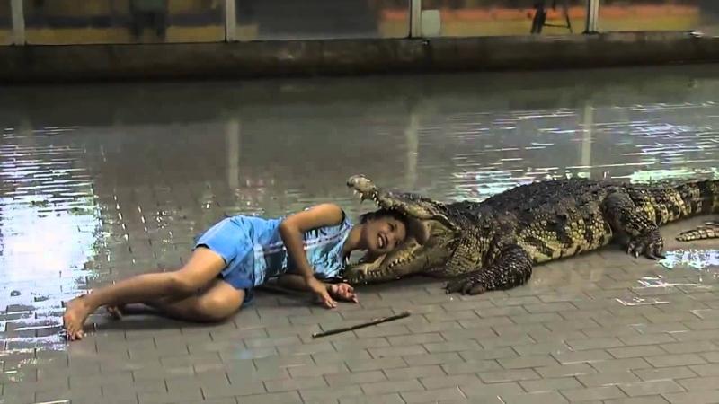 Đấu sĩ mạo hiểm đưa đầu vào miệng cá sấu