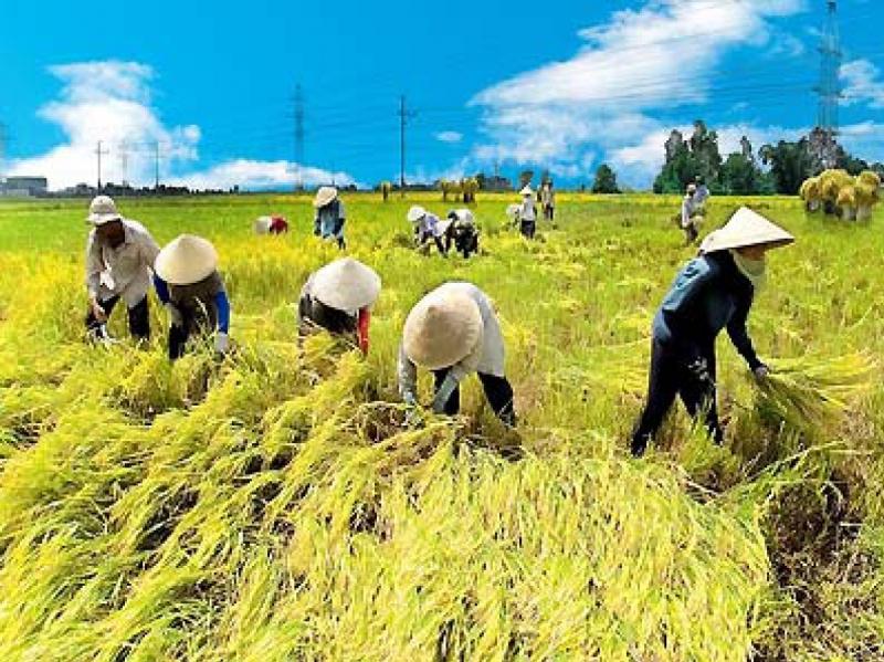 Công việc làm nông là một công việc lao động vất vả
