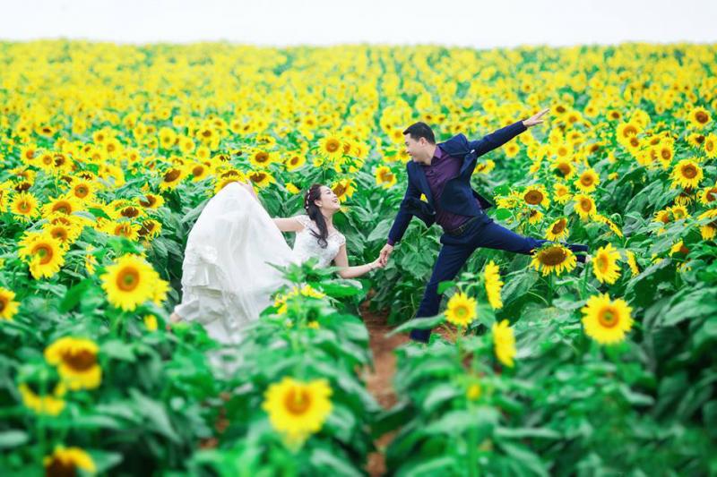 Hoa hướng dương Nghĩa Đàn khoe sắc
