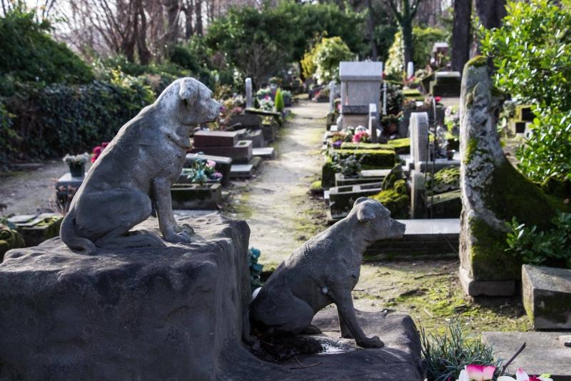 Nghĩa trang cho động vật đầu tiên trên thế giới