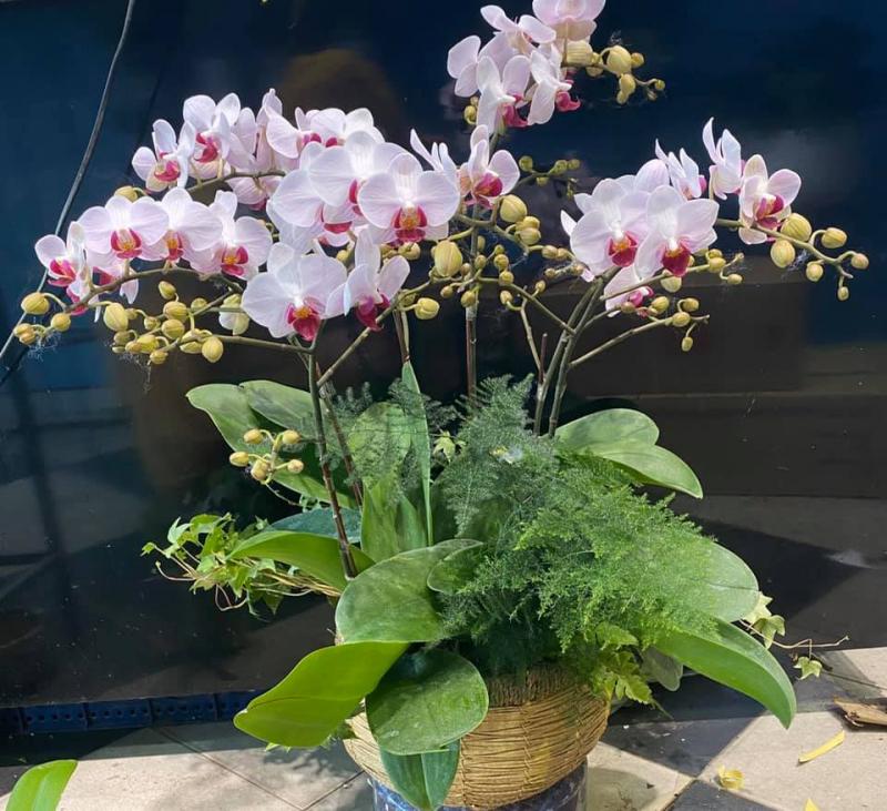 Hoa tươi Ngọc Hân