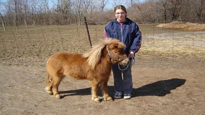 Ngựa Falabella