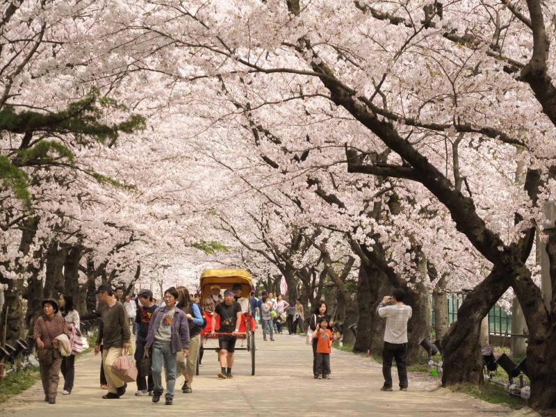 Top 16 điều thú vị trong văn hóa của người Nhật Bản