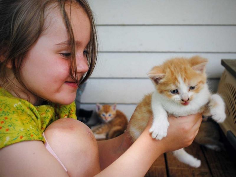 Bạn có phải người thích nuôi mèo không?