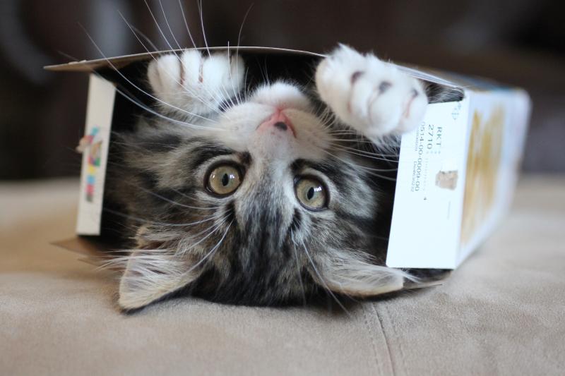 Những người thích nuôi mèo thường hướng nội, tâm hồn nhạy cảm và có tình yêu thương động vật.