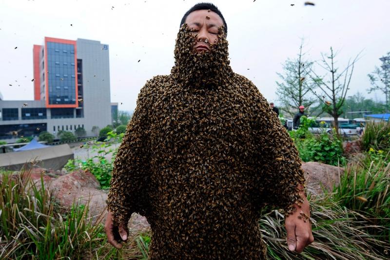Người thu hút ong nhiều nhất thế giới