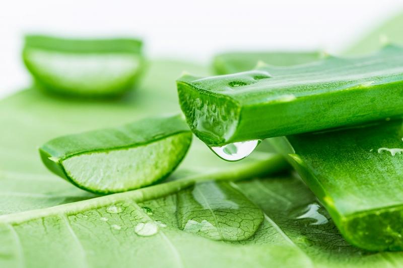 Nha đam có rất nhiều công dụng làm đẹp trong đó còn có công dụng trị thâm môi.