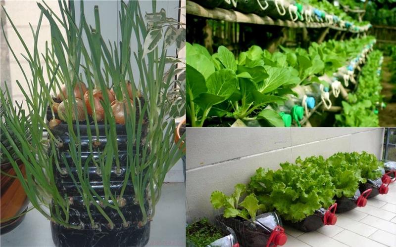 Đất sạch trồng rau tại nhà hcm