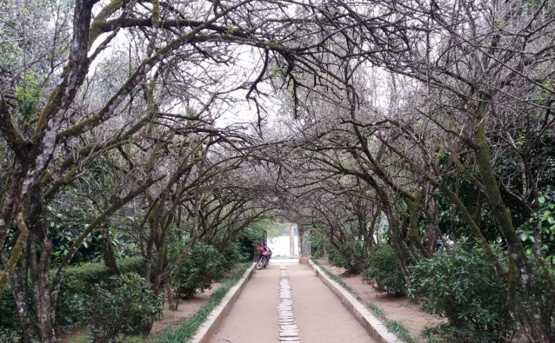 Nhà vườn An Viên