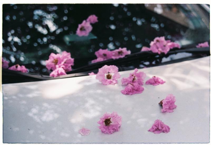 Trưa hè nhặt cánh hoa rơi- Xếp thành bốn chữ phai phôi đoạn tình.