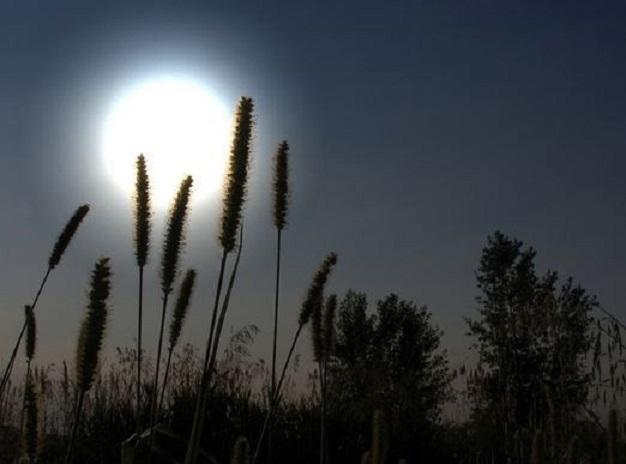 Cánh đồng, khu vườn, mái nhà... tất cả đều được phủ ánh sáng mát dịu của ông trăng.