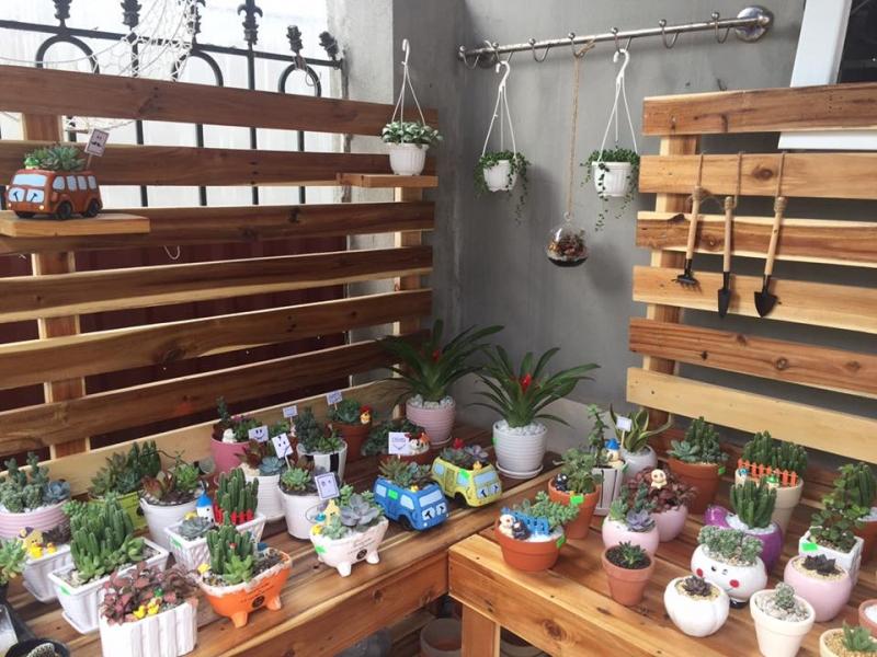 Những chậu cây xinh xắn tại Vườn mini
