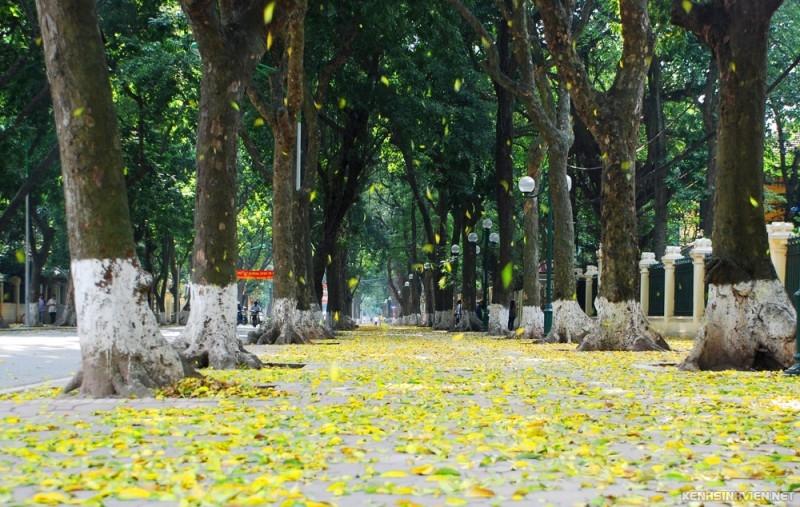 Những con đường trải lá vàng