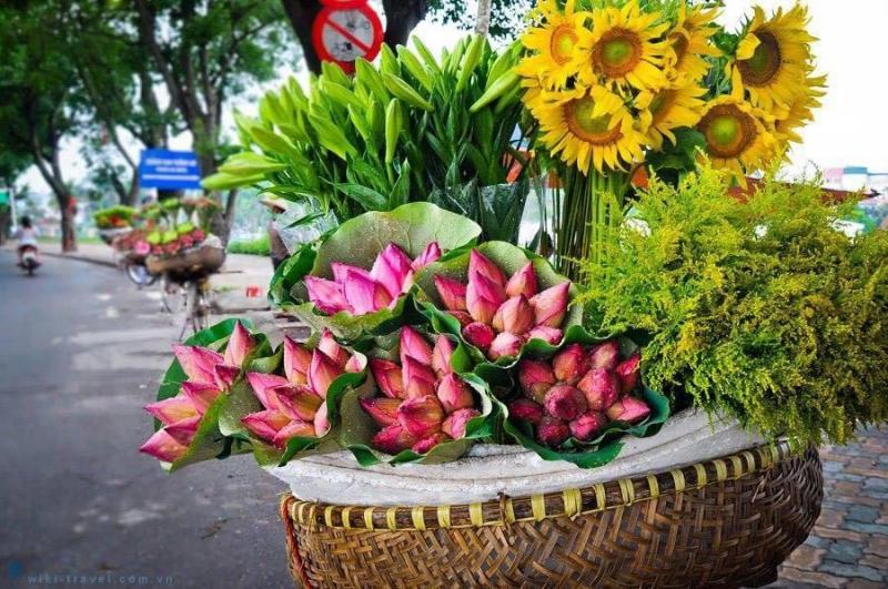 Hà Nội duyên dáng trong những cánh hoa rong