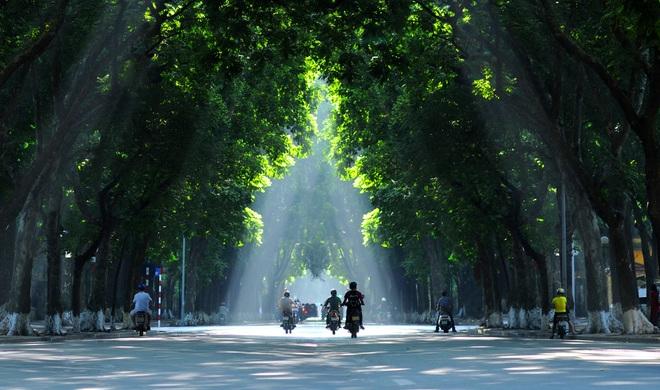 Con đường rợp bóng cây