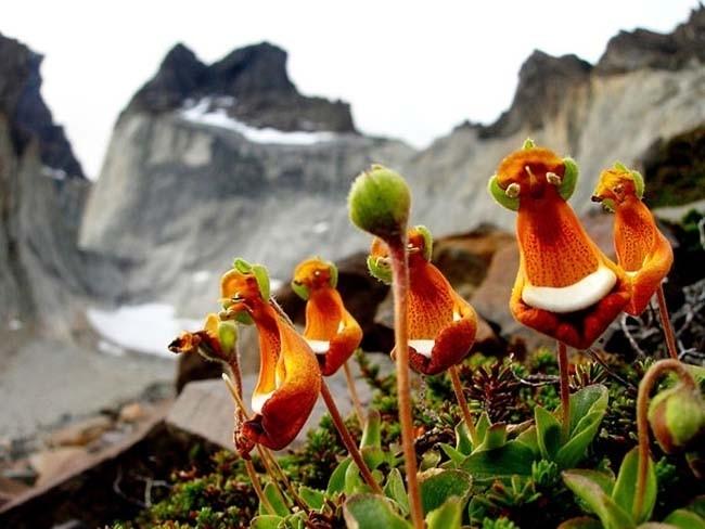 Top 18 loài hoa kì lạ nhất quả đất