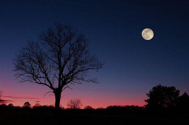 Những Mặt trăng của Trái đất