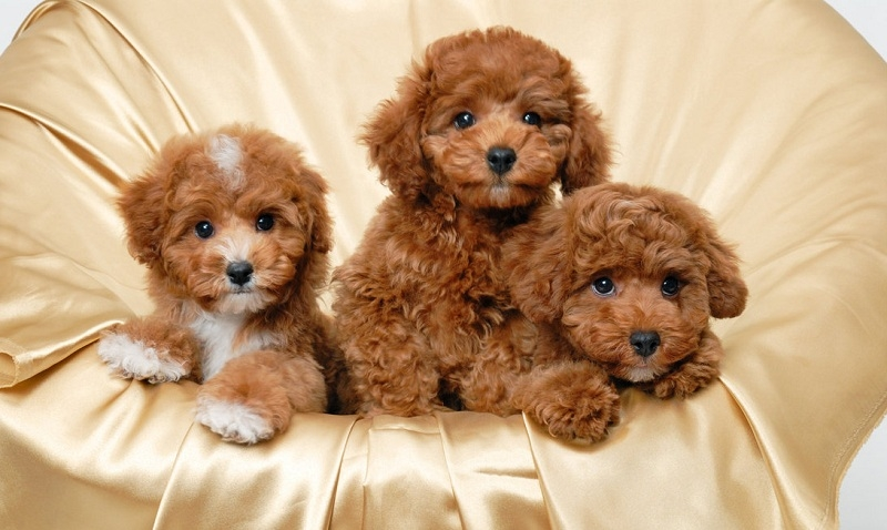 Những chú cún đáng yêu