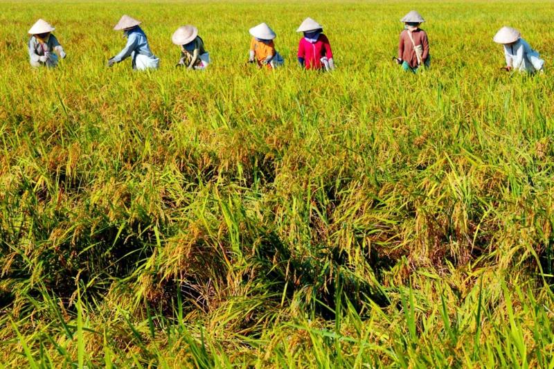 Nông dân là nghề có tỷ lệ tự sát thứ 9